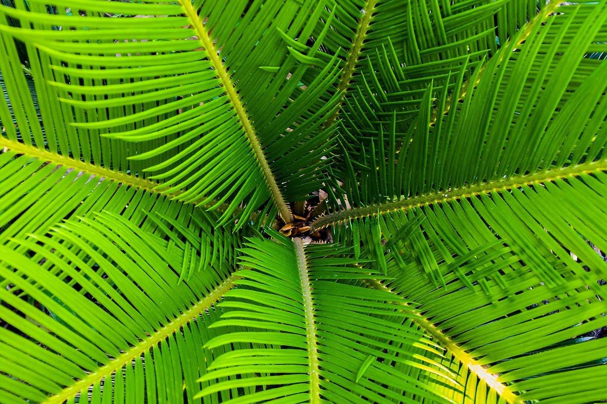 Bohatá tropická zeleň