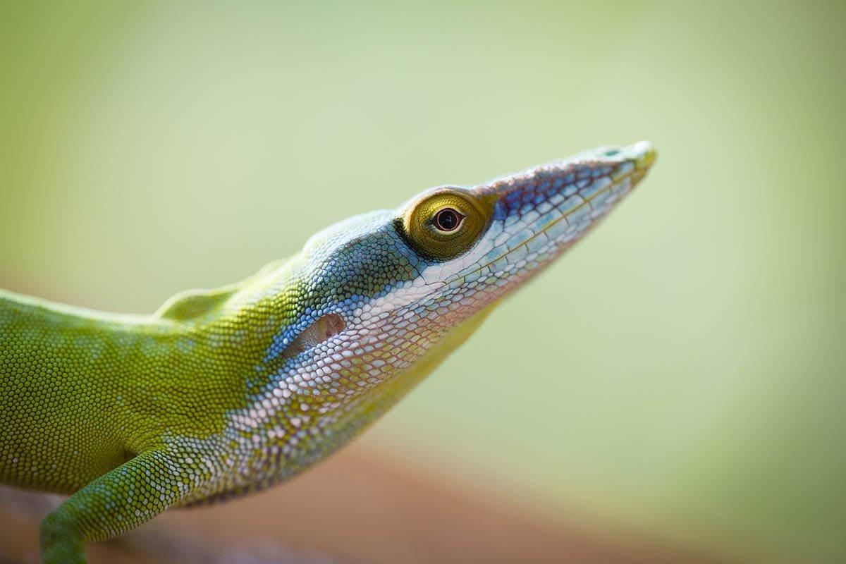 Rozmanitá fauna